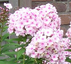 Tuin inrichten en veranderen for Tuin inrichten planten